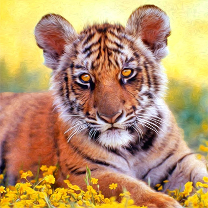 Baby tigers face - photo#11